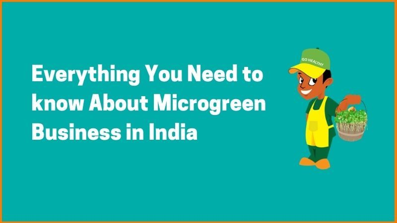 Everything You Need to know About Microgreen Business in India