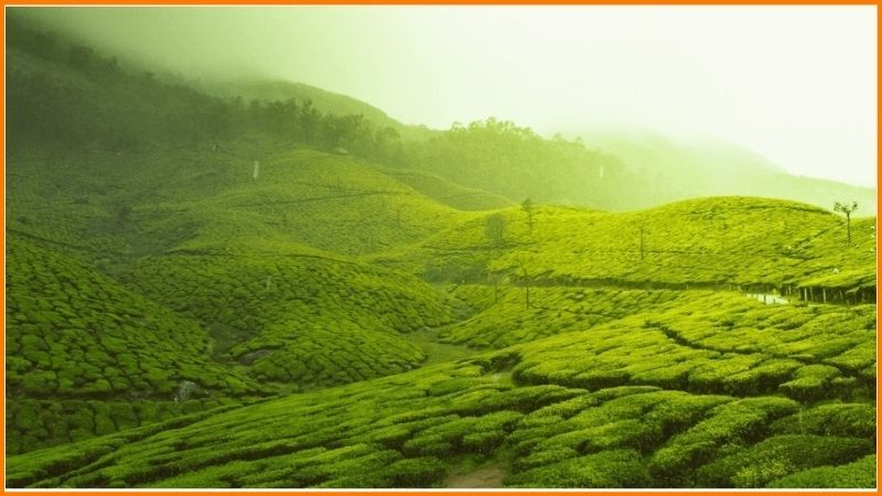 Samaara started with a premium range of tea blends from Assam