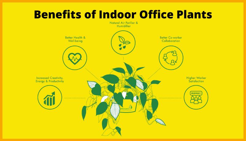 Benefits of Indoor Office Plants