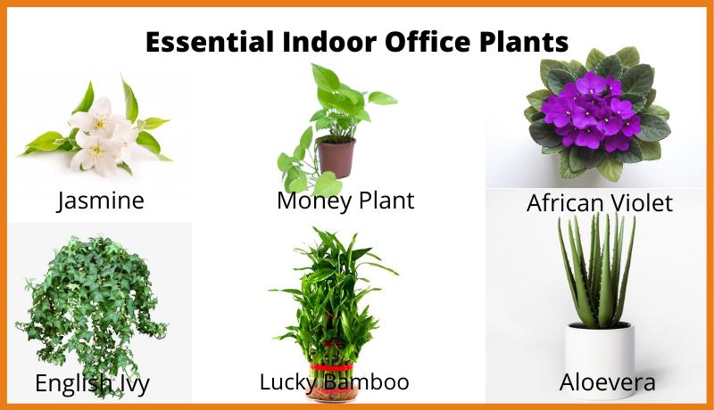 Essential Indoor Office Plants