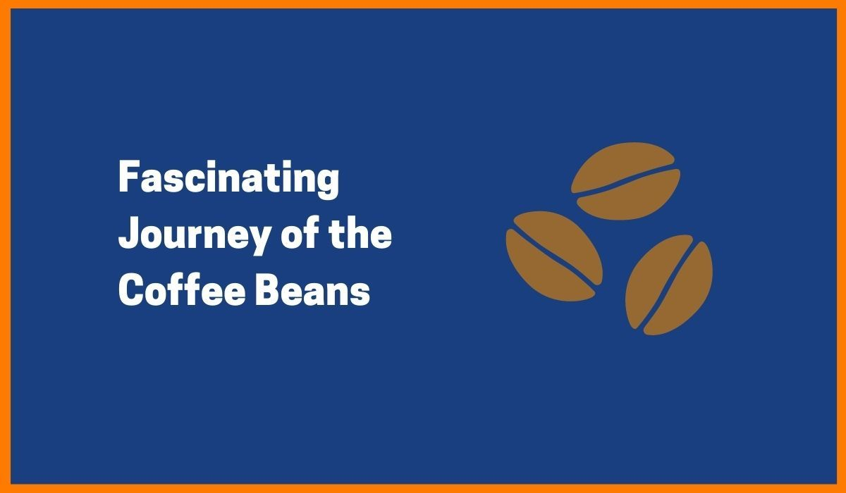 Supply Chain of Coffee Business