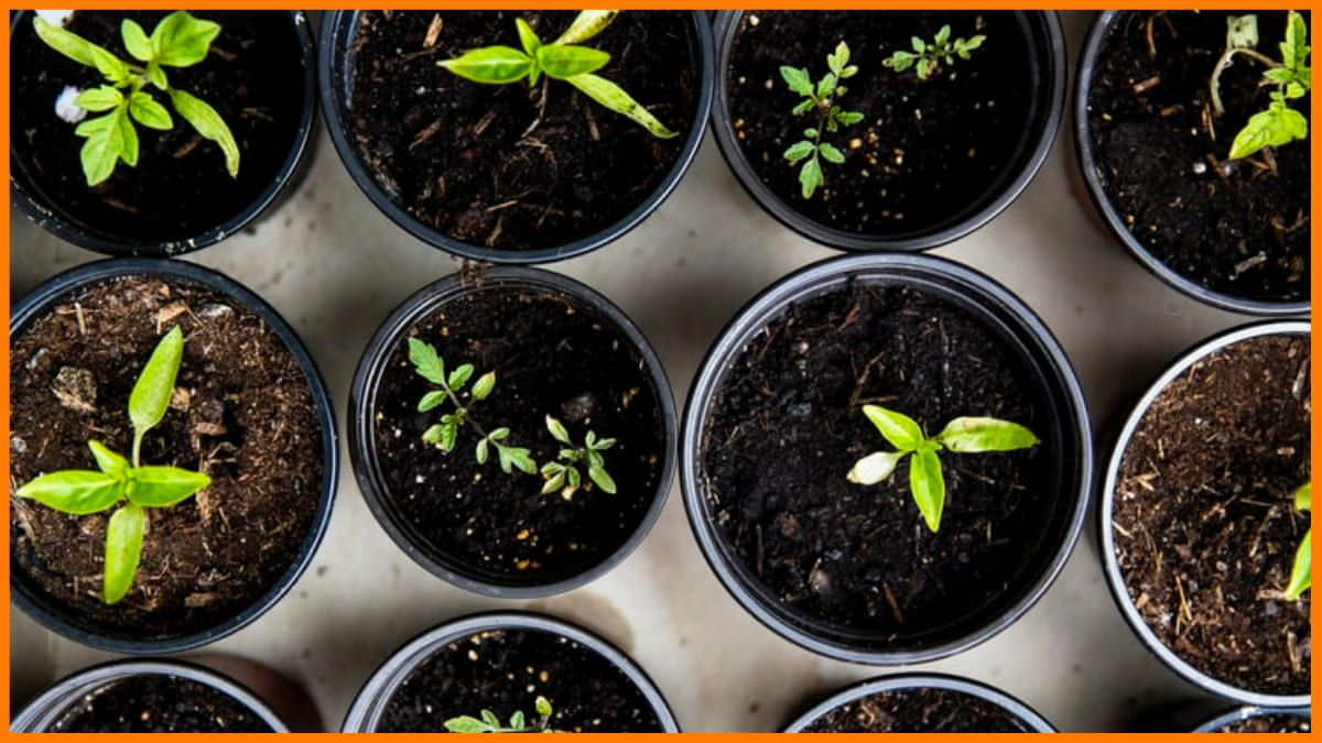 Gardening - Most Profitable Niches for Dropshipping