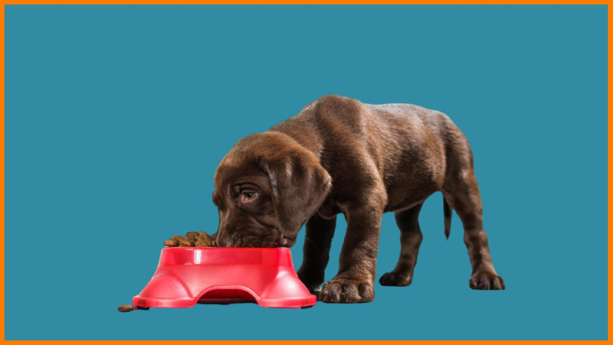 Pet Supplies -  Most Profitable Niches for Dropshipping